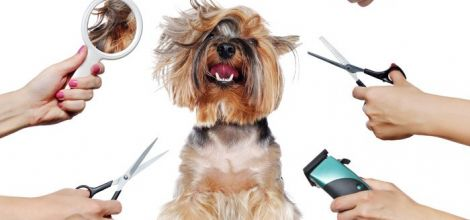 Pet Grooming Services Allowed to Open in Niagara Falls